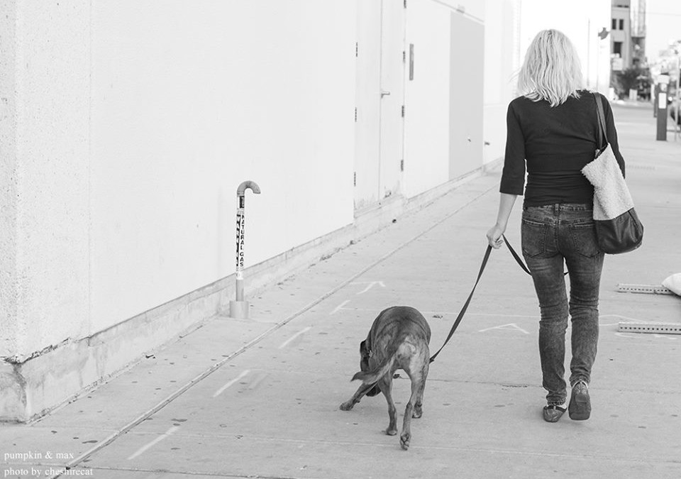 THAT CUTE DOG & PHOTO CREDITS